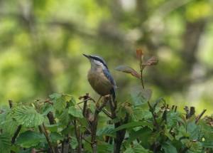 Birdwatching near Yr Hen Stablau